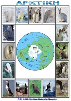 Arctic Animals, Montessori Materials, Animal Crafts, Geography, Science, Education, Children, Winter, Projects