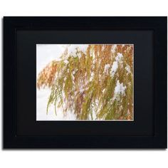 Trademark Fine Art Winter on Redwood Canvas Art by Kurt Shaffer, Black Matte, Black Frame, Size: 11 x 14, Multicolor