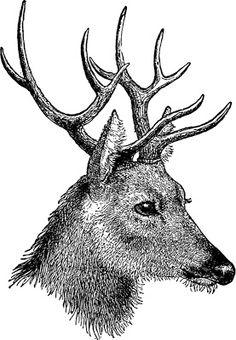 Free vintage digital stamps Oh Deer :@ Clip Art Vintage, Images Vintage, Poster Minimalista, Vintage Illustration, Motifs Animal, Wood Burning Patterns, Free Christmas Printables, Free Printables, Christmas Clipart