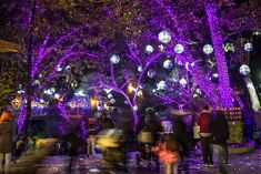 Whether you like your holidays on the traditional side or served with a twist, you'll find plenty of eye-popping, jaw-dropping wonder at L.A. Zoo Lights, which is...