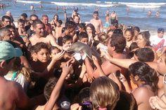 De novo? Relato diz que golfinho foi morto por turistas que tiravam selfies - https://anoticiadodia.com/de-novo-relato-diz-que-golfinho-foi-morto-por-turistas-que-tiravam-selfies/