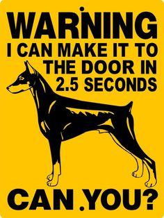 How To Deal With Aggressive Dog Behavior Problems - Dog Health Care and Information Doberman Puppies, Doberman Pinscher Puppy, Doberman Breeders, Daschund, Doberman Training, Dog Training, Shetland Sheepdog Puppies, Aggressive Dog, Dog Signs