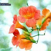 Slovenská hymna (nech bože dá) - recept | Varecha.sk Plants, Pizza, Profile, Plant, Planting, Planets