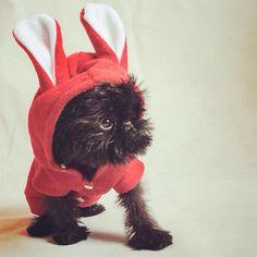 cutest little bunny - via @Nicole Mack on #Instagram #adorable #puppy