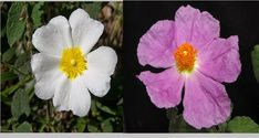 Flowers, Plants, Blog, Blogging, Plant, Royal Icing Flowers, Flower, Florals, Floral