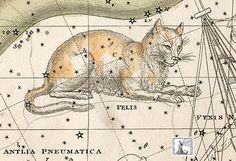 "Felis, the Cat, a constellation designated in 1799 by French astronomer Joseph Jérôme de Lalande, a noted cat-lover.  As depicted in Alexander Jamieson's 1822 star atlas. It was not included in the 88 modern constellations passed by the IAU. What a shame. ©Mona Evans, ""Cats in the Sky"" http://www.bellaonline.com/articles/art23214.asp"