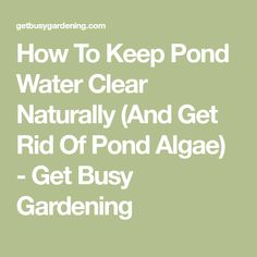 How To Keep Pond Water Clear Naturally (And Get Rid Of Pond Algae) - Get Busy Gardening