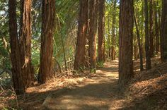 Huddart Park - wonderful trails through redwoods, old forests, and sunny slopes.