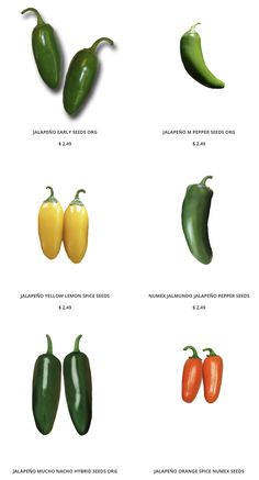 We have LOTs of different Jalapeno seeds for every taste and spice level!