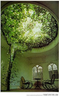 Awesome indoor tree…awesome writing space.