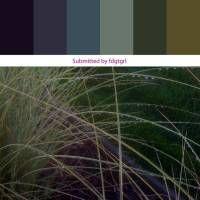 Color Palette Project 2