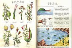 codex seraphinianus - Buscar con Google