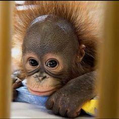 I seriously want one....so freakin cute <3