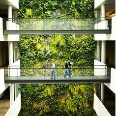 #jardimvertical #jardinsverticais #jardim #garden #greenwall #greenwalls #paredeverde #paredeviva #paredesverdes #paisagismo #landscaping #landscapedesign #design #designing #designlovers #arquitetura #architecture #archi #archilovers #arquitectura (Projeto e foto não autorais)
