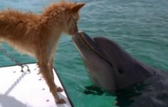 View this touching dog & dolphin VIDEO here: http://www.youtube.com/watch?v=J4WEkEAV1os