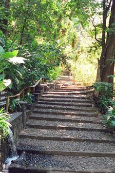 Wide stone pathways take visitors on tour beneath towering tropical trees at Cupatitzio Gorge National Park.