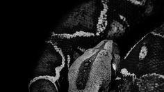 La proprietà intellettuale della presente immagine è di Jean T. Noir / PhPositivo © La riproduzione totale, parziale, in qualsiasi percentuale ed a qualsiasi titolo è vietata.