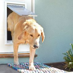 Patio Pacific Thermo Sash 2e Automatic/Electronic Cat U0026 Dog Door For  Windows | Pinterest | Patios, Doors And Cat