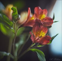 Ariadna Belkina Nature, Flowers, Plants, Naturaleza, Plant, Nature Illustration, Royal Icing Flowers, Off Grid, Flower