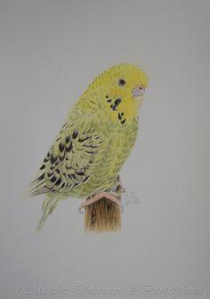 Budgie Kiwi. Drawing in colored pencil. Wellensittich. Zeichnung mit Buntstiften