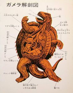The anatomical features of Gamera and his foes are detailed in a set of illustrations found in one volume of the Kaijū-Kaijin Daizenshū movie monster book series published by Keibunsha in 1972
