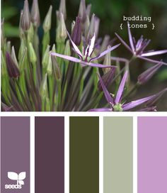 Budding tones - really like this colour scheme, just don't know where to use it! Could this be the house exterior scheme? Maybe the middle 3,  or 1, 3,4 (from left)?    Would like nice in our tropical bush setting!!