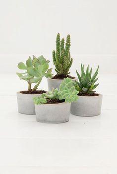 Helemaal hip! Kleine vetplanten in betonnen (zelfgemaakte!) potjes.