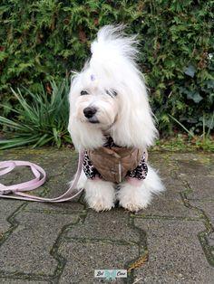 Ubranka dla psów, clothes for dogs - Jacket English Elegance and blouse Pink Star Dog Jacket, Pink Stars, English, Blouse, Dogs, Etsy, Animals, Clothes, Blouse Band