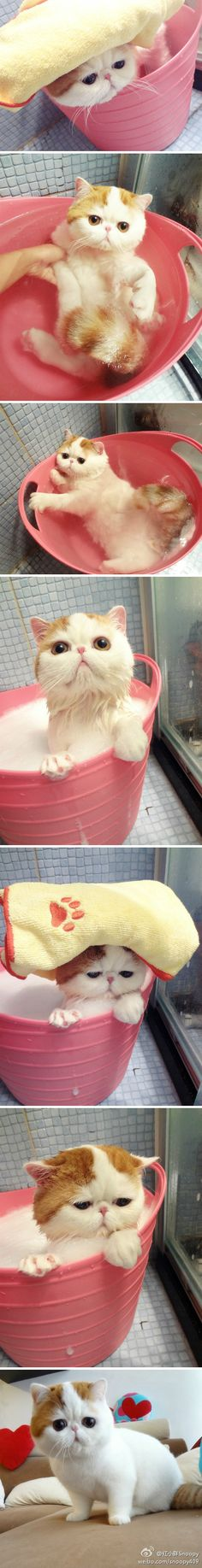 First off this cat is absolutely adorable, Second, I can believe that cat just sits in the bath like that! I WISH my cat would do that!