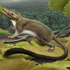 The ancestor of placental mammals which rose up out of the ashes of the dinosaur extinction. Wale, Extinct Animals, Rare Animals, Prehistoric Creatures, Fauna, Science And Nature, Clipart, Mammals, Primates