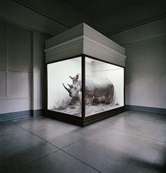 Rhino, Field Museum, Chicago, Illinois. Photo from Museology - http://www.richardross.net/portfolios/13071-museology