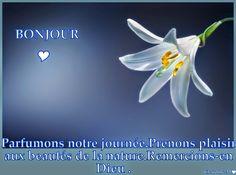 Je vous envoie un GRAND bonjour.  :-)) Agréable journée à tous.♥  Claudine Michau - Google+