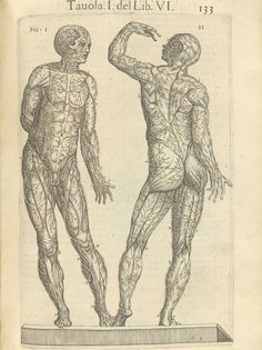 """Page 133 of Juan Valverde de Amusco's Anatomia del corpo humano, 1560 featuring the front and back sides of a cadaver displaying the circulatory system."""" From the collection of the National Library of Medicine. Visit: http://www.nlm.nih.gov/exhibition/historicalanatomies/valverde_home.html"""
