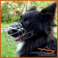 Anatomiczny kaganiec dla psa ForDogTrainers Horses, Dogs, Animals, Animales, Animaux, Pet Dogs, Doggies, Animal, Animais