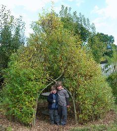 living structures | wpid2486-Living-Willow-Structures-GWLL004-nicola-stocken.jpg