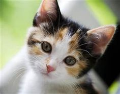... investigate a report of possible mail order fraud and theft of a cat