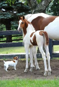 Os Cavalos Também Podem Ser Fofos!- Sou elegante!