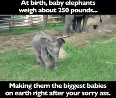 At Birth memes cool meme hilarious humor funny images animal images cool images