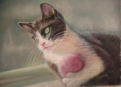 Grey and White Kitty Cat Fine Art Print by ArtByJulene on Etsy, $15.00