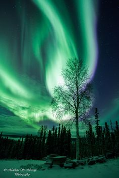 Aurora  Taken by Marketa S Murray on October 30, 2013 @ It was another awesome night with my best friend,husband,photographer..and aurora ch...