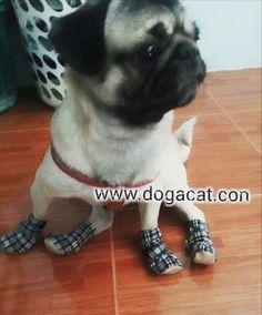 นองนมปนใสรองเทาสนข นารกมากๆคะ  line : dogacatthailand  www.dogacat.com FB : dogacat  Fanpage : dogacatthailand Instagram : dogacat  #dogacat #reviewdogacat #เสอผาหมา #เสอสนข #เสอหมา #เสอผาสนข #เสอแมว #เสอผาแมว #แวนตาสนข #รองเทาสนข #puppyclothes #petstagram #puppy #petclothes #petsofinstagram #dogstagram #dogoftheday #dogdress #dogdaily #dogapparel #dogclothes #dogcute  #dogshoes #doghat #chihuahua #shihtsulovers #shihtzu #shihtsugram #ปลอกคอสนข #หมวกสนข by dogacat #lacyandpaws