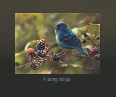 Alluring Indigo
