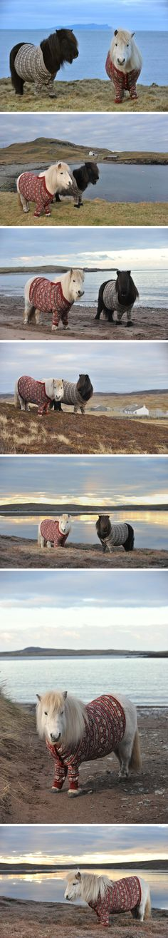 Ponies wearing cardigans. I'm not really sure why I think this is so awesome... but I just can't help loving it.