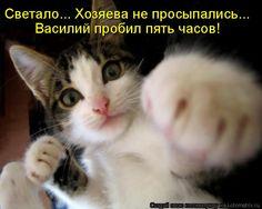 Светало... Хозяева не просыпались... Василий пробил пять часов!