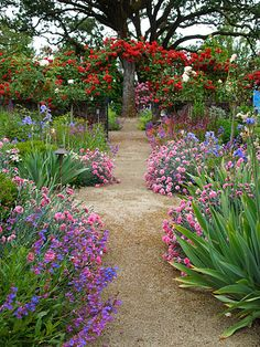 I love the strong red anchoring and what about that wonderful tree!. . . http://michaelbatesgardens.com/theme_gardens_estates.php