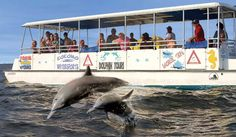 Outer Banks Dolphin Tours