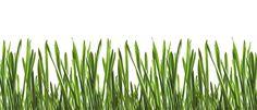 Fototapete Gras (Nr. 16070)  www.berlintapete.de