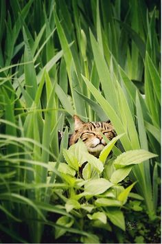 * *> Walter Mitty Kitty with his fantasy of being king o' de jungle.