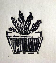 Adromischus, dřevořez, woodcut