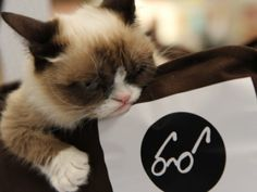 Grumpy Cat Rocks BookExpo of America photo taken June 2013   Petside #Tard #GrumpyCat #TardarSauce